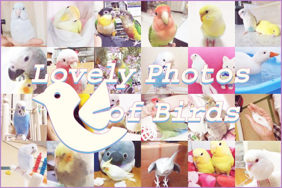 鳥さんのラブリー写真集(全393作品)